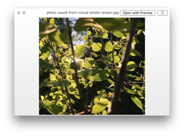 Preview a file in Trash with Quick Look for Mac