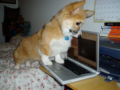 dog with powerbook