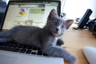 kitten-and-mac-5-400x267