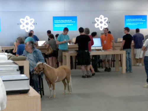 horse in apple store