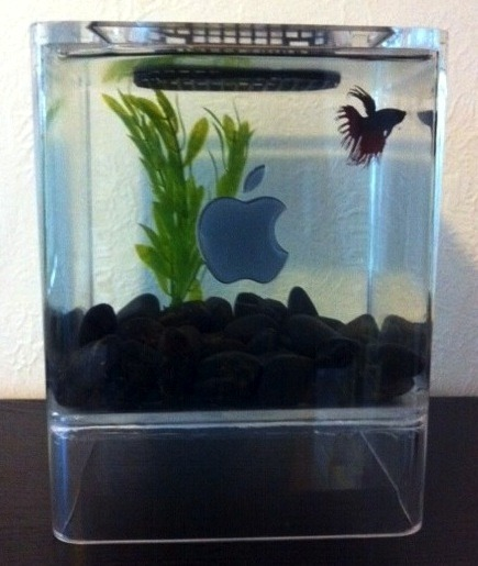 mac mini fish aquarium 2