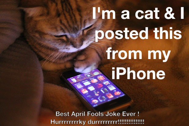 cat-iphone