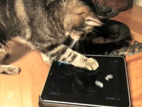 Cat playing iPad games