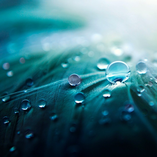 water drops on feathers wallpaper