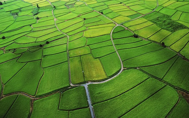 Rice paddy wallpaper