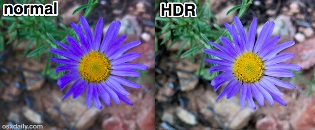 Normal vs HDR iPhone Macro Shot