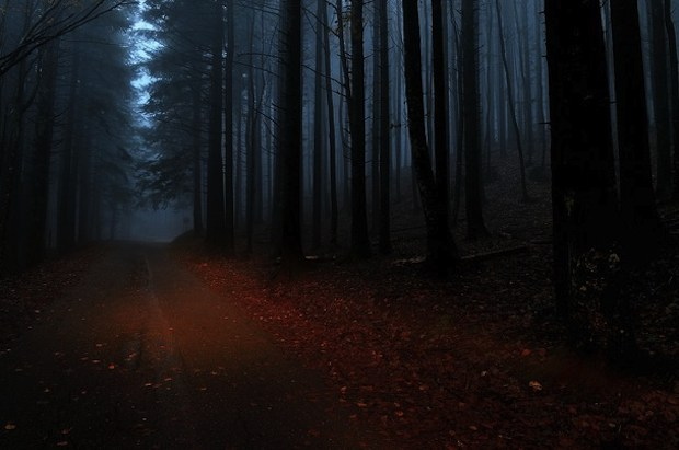 forest at  night wallpaper