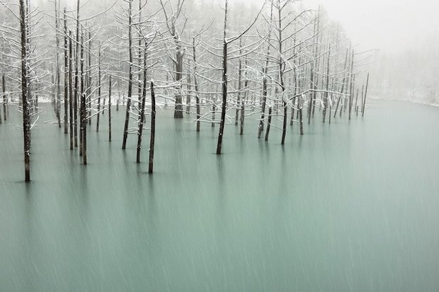 snow pond of japan wallpaper