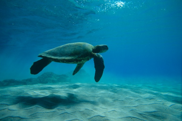 Turtle under the waves water wallpaper