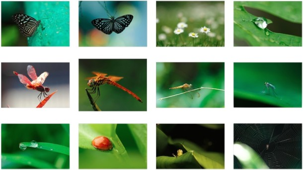 12 Incredibly Stunning Nature Macro Shot Wallpapers