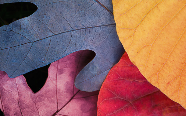 fall-leaves-overview_retina_large_2x