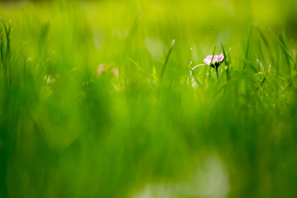 Green-Grass-Fields-Wallpaper-210