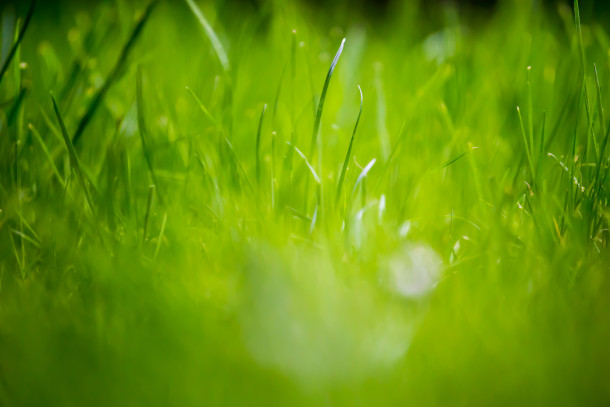 Green-Grass-Fields-Wallpaper-212