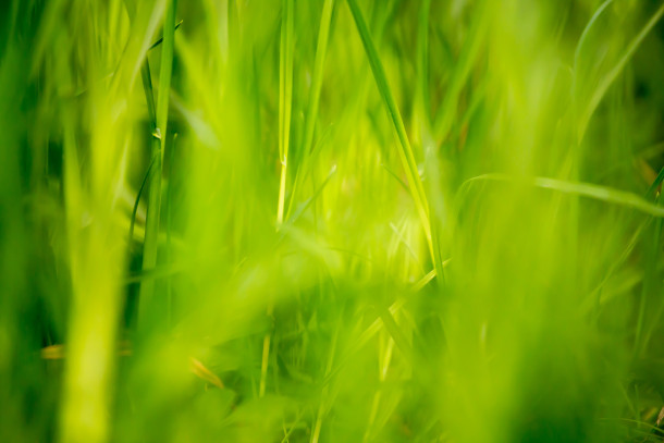 Green-Grass-Fields-Wallpaper-284