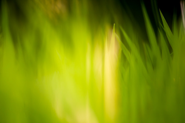 Green-Grass-Fields-Wallpaper-291