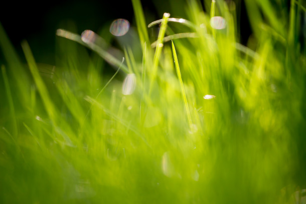 Green-Grass-Fields-Wallpaper-295