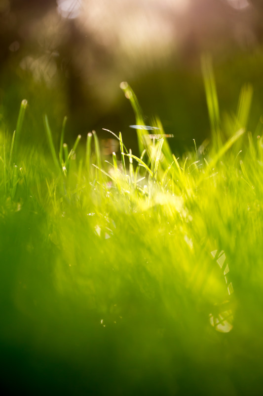 Green-Grass-Fields-Wallpaper-307
