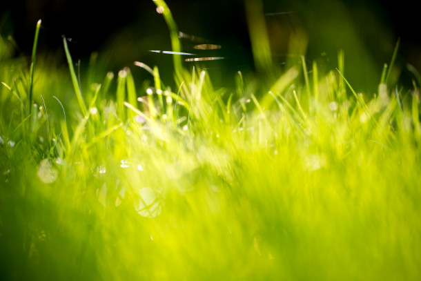 Green-Grass-Fields-Wallpaper-311