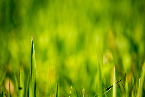 Green-Grass-Fields-Wallpaper-356