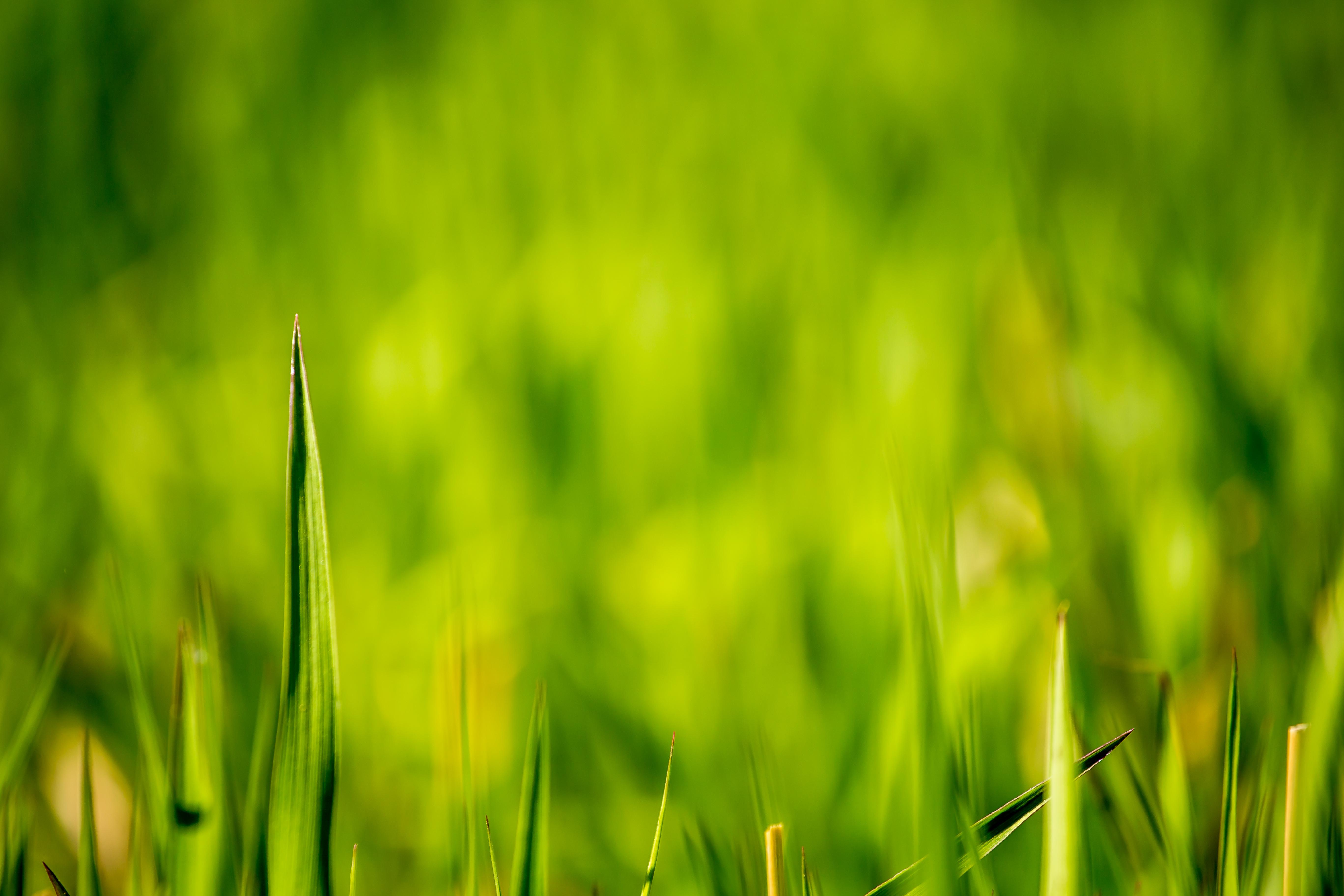 12 Beautiful Green Grass Field Hd Wallpapers Osxdaily