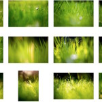 Green grass fields wallpaper collection