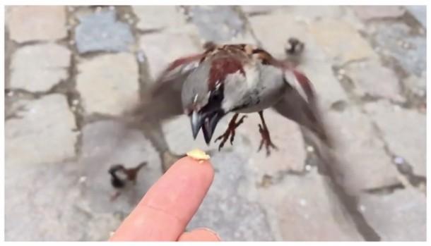 Apple iPhone bird eating cracker commercial