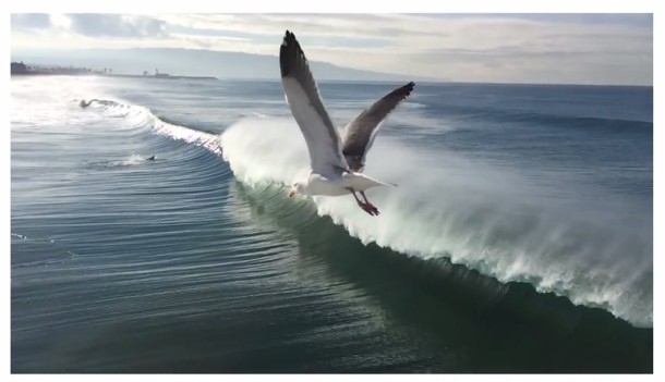 Seagull flies over a breaking wave in California, shot with an iPhone