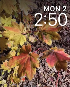A custom photo Apple Watch face