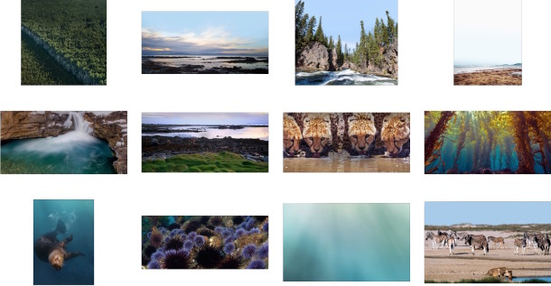 Apple Earth Day Hidden Nature Wallpapers