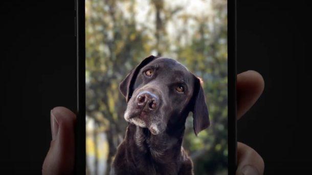 Portrait mode dog commercial for iPhone 7 Plus